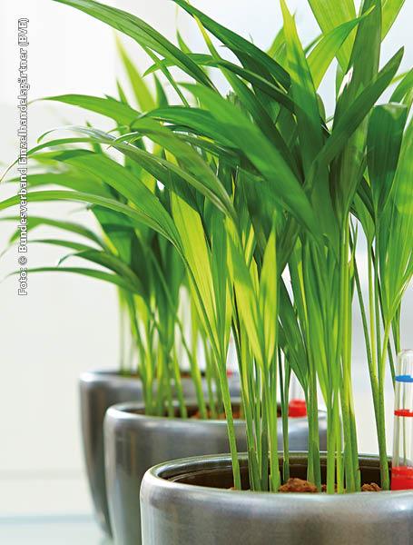 fr pflanzen selber machen perfect hochbeet bauplan with fr pflanzen selber machen pflanzen. Black Bedroom Furniture Sets. Home Design Ideas