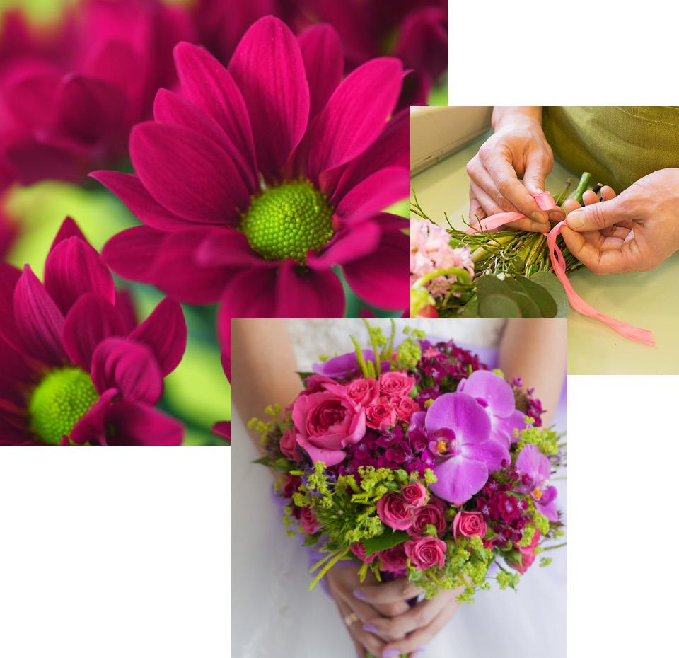 Nahaufnahme einer magentafarbenen Blume. 2 Hände, die einen Blumenstrauß binden und eine rosa Schleife herumwickeln. Nahaufnahme eines Straußes mit pinken Rosen und lila Blüten in den Händen einer Braut.