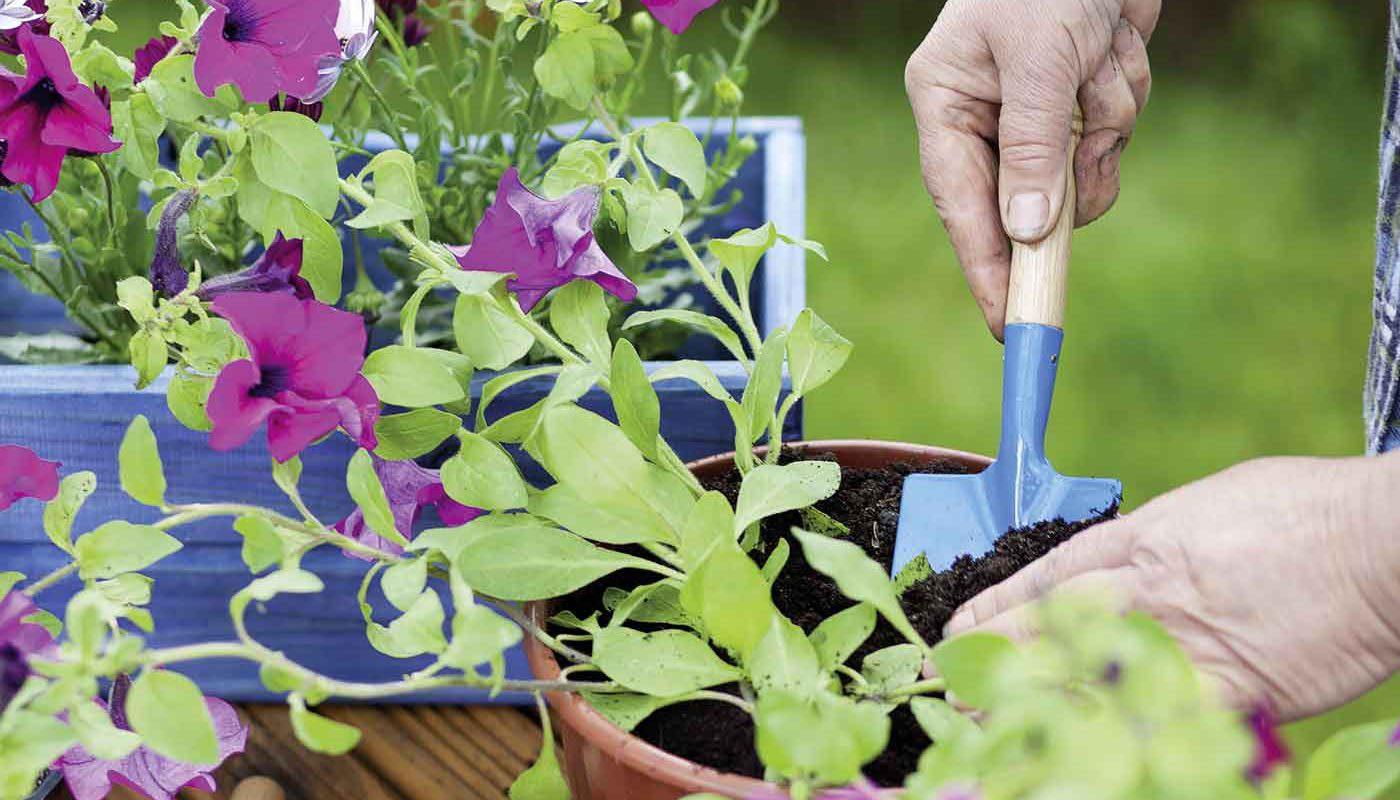 unsere pflanzen wachsen 1a garten zitzelsberger in ingolstadt blog. Black Bedroom Furniture Sets. Home Design Ideas